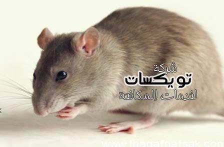 Photo of طرق مبتكره للقضاء على الفئران