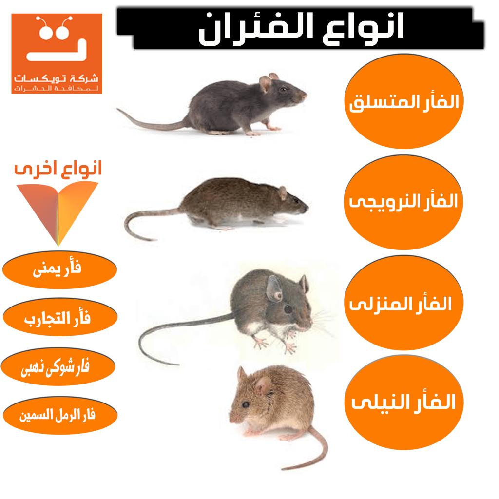 انواع الفئران وطرق مكافحتها والتخلص منها