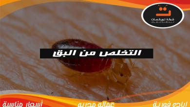 Photo of التخلص من البق