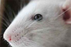 شركات مكافحة فئران بالرياض