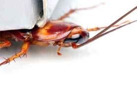 مكافحة الصراصير بالرياض