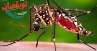 احمى نفسك من الحشرات