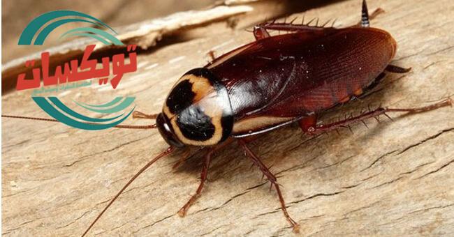 افضل الوسائل للقضاء على الحشرات