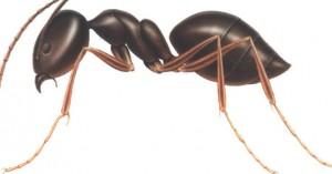 شركة مكافحة النمل بالرياض