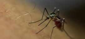 القضاء على البعوض