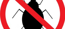 التخلص من الحشرات