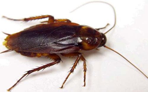شركة مكافحة الحشرات بالقصيم