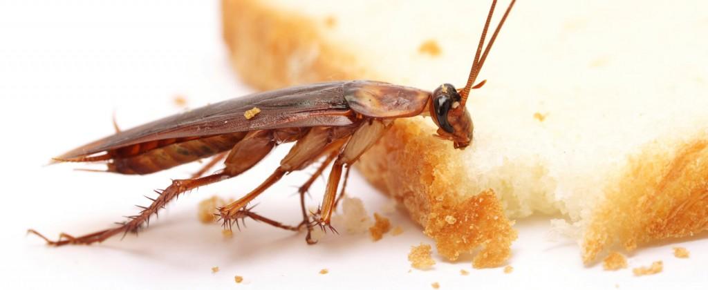 شركة مكافحة حشرات بحميس مشيط