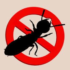 شركة مكافحة النمل الابيض بجازان