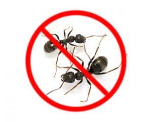 ِركة مكافحة الحشرات بالخبر