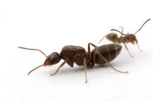 مكافحة الحشرات بالقطيف