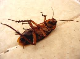 مكافحه الحشرات بالمنزل
