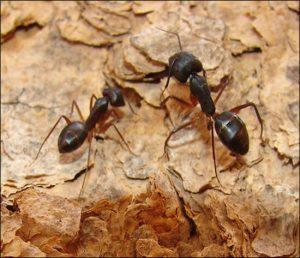 القضاء علي النمل في المنزل