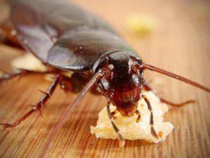 القضاء علي الصراصير في المنزل