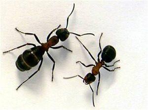 الحفاظ علي المنزل من الحشرات