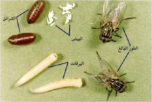 اسعار شركات مكافحة الحشرات