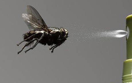 ارقام شركات مكافحة حشرات بالاحساء