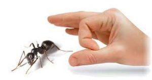 ارقام شركات مكافحة النمل الابيض بالرياض