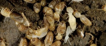 اسعار مكافحة النمل الابيض بالدمام