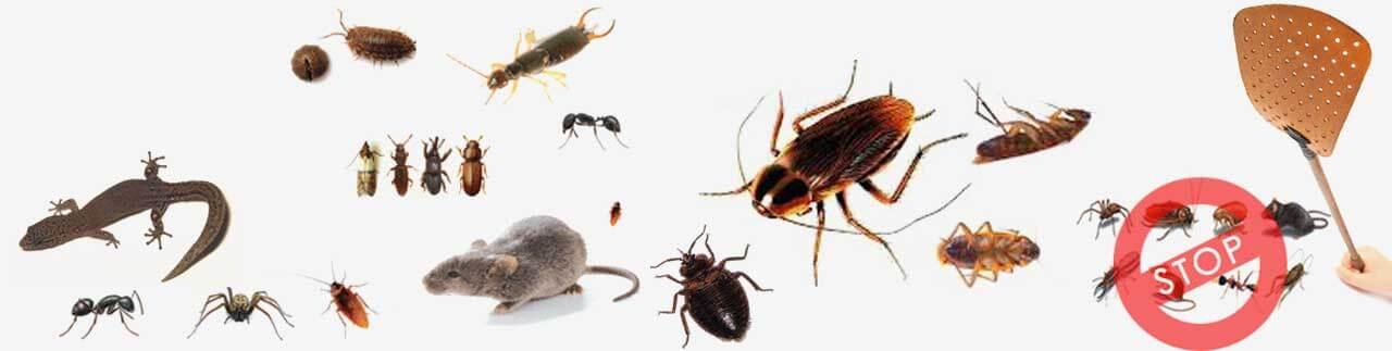 اسعار مكافحة الحشرات بالرياض