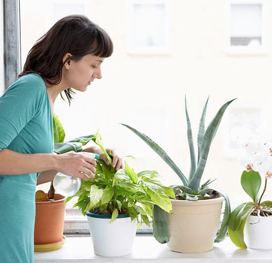 شركة مكافحة حشرات النباتات المنزليه بالاحساء