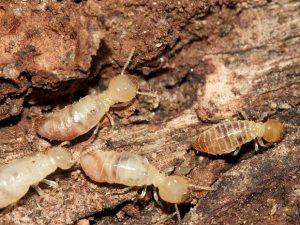 اسعار مكافحة النمل الابيض بالرياض