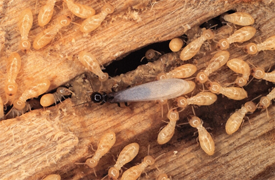 شركة مكافحة النمل الابيض رخيصة
