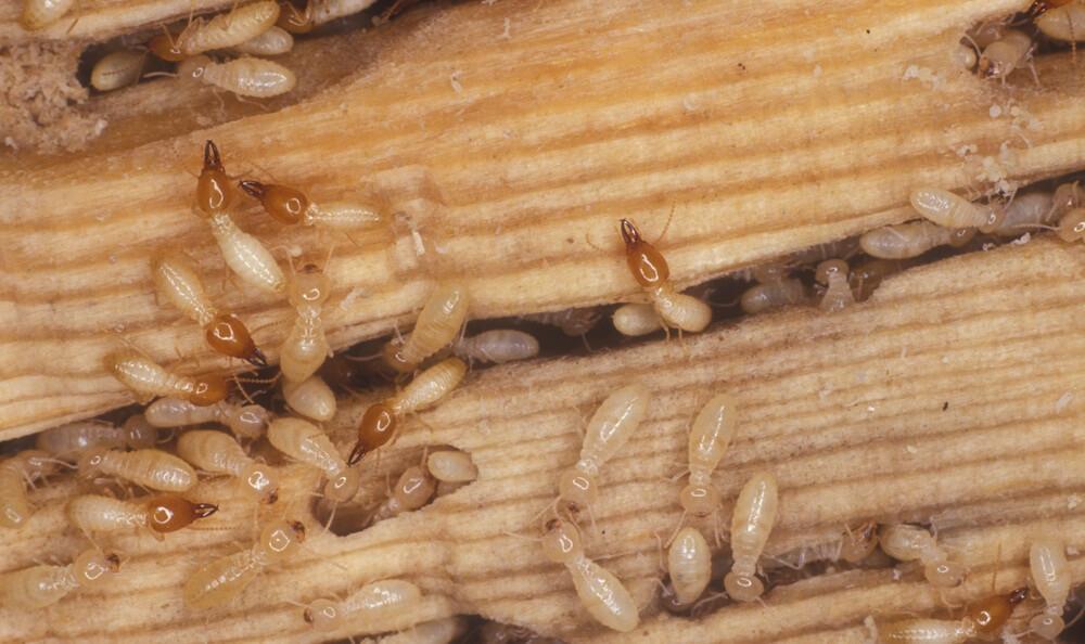 شركة مكافحة النمل الابيض رخيصة بالرياض