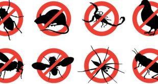تليفونات شركات مكافحة حشرات بالاحساء