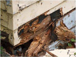 ارقام شركات مكافحة النمل الابيض بالدمام