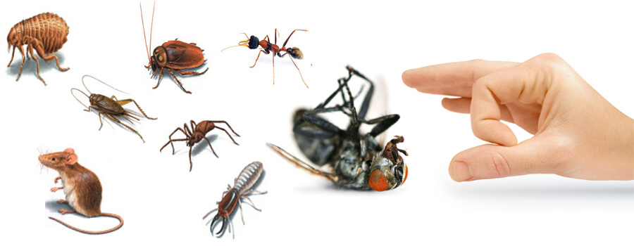 Pest-Control-Cleaning-Services-in-Dubai1-0(1)
