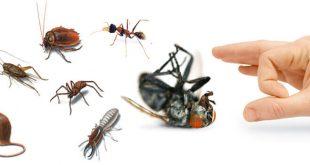 شركة مكافحة حشرات رخيصه بالاحساء