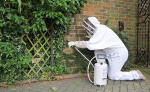 شركة مكافحة النمل الابيض رخيصه بالدمام