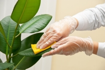 شركة مكافحة حشرات النباتات المنزليه بالدمام