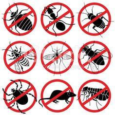 تليفونات شركات مكافحة حشرات بالدمام