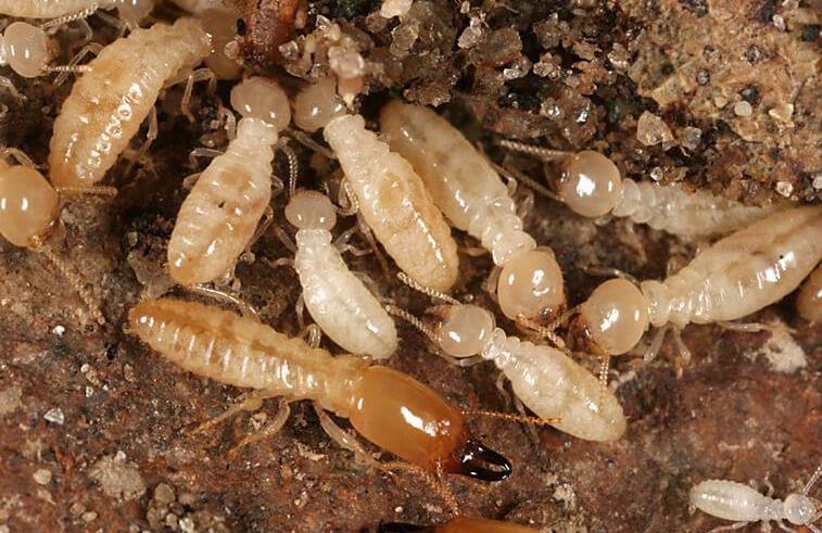 تليفونات شركات مكافحة النمل الابيض بالدمام