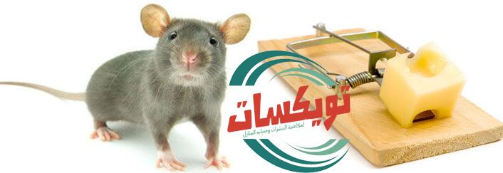شركة مكافحة الفئران بجازان