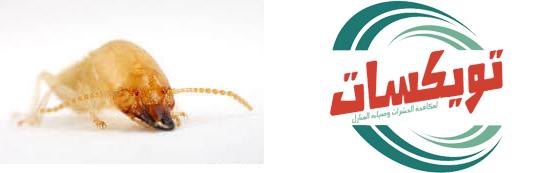 شركة مكافحة النمل الابيض بالقطيفشركة مكافحة النمل الابيض بالقطيف