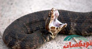 شركة مكافحة ثعابين بالرياض
