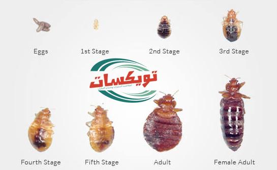 Photo of شركة مكافحة بق الفراش بابها