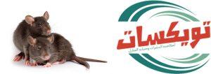 شركة مكافحة الفئران بابها