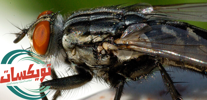 شركة مكافحة حشرات بالجبيل