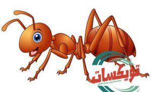 القضاء على النمل