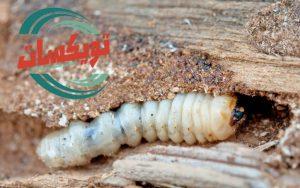 مكافحة النمل الابيض في المنزل