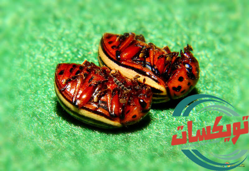 ابادة حشرات