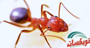 كثرة النمل في البيت