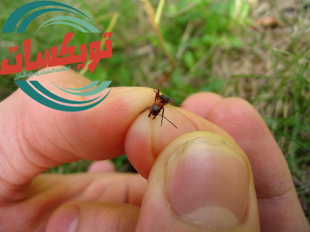 كيف اتخلص من النمل