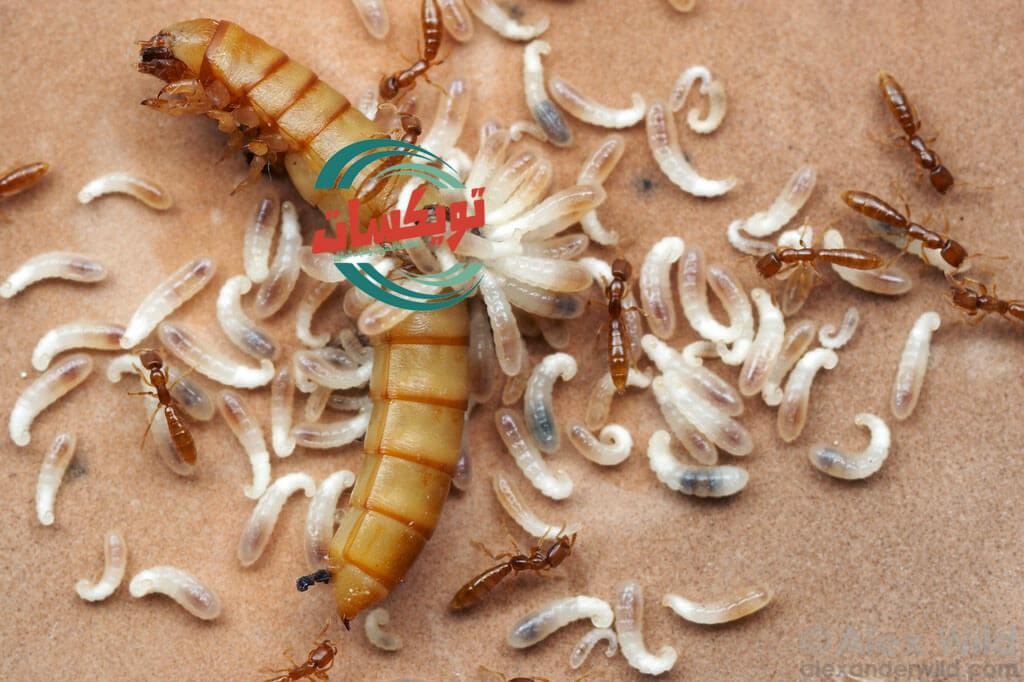 Photo of كيفية التخلص من النمل الابيض