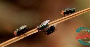شركة مكافحة حشرات بالنعيرية