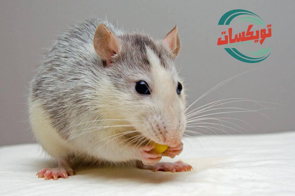 شركة مكافحة الفئران بالنعيرية